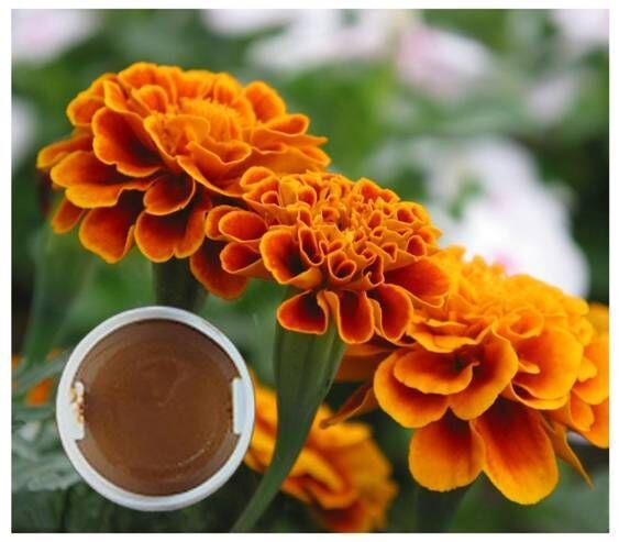 叶黄素浸膏 水产类着色剂